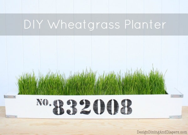 DIY-Wheatgrass-Planter-from-Design-Dining-+-Diapers